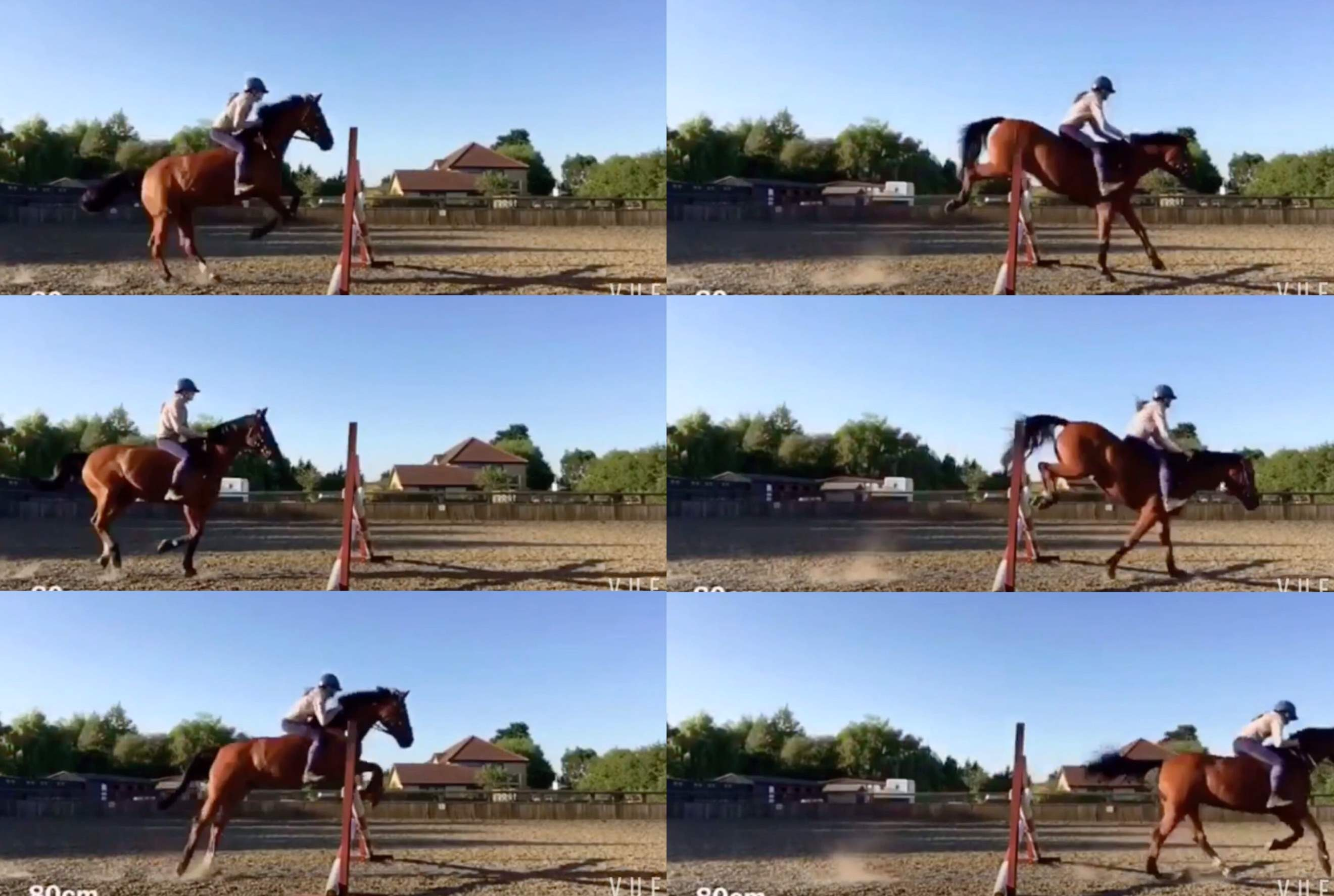 How Does The Jump Of A Horse Affect Its Performance In Showjumping Competitions