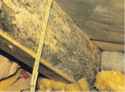 Roof beams infested with mould – a result of lacking building protection.