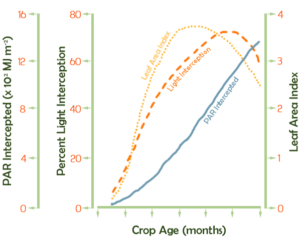 http://www.sugarcanecrops.com/sites/sugarcanes/_media/mediabank/177_mb_file_a5789.jpg