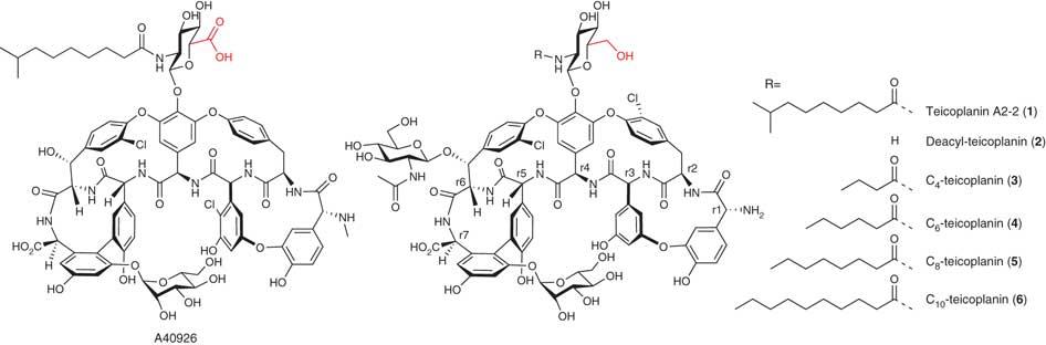 Structures of relevant glycopeptide antibiotics.