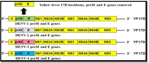 C:\Users\Admin\Desktop\dengue\images\Figure-2-Sanofi-Pasteur-CYD-chimeric-Yellow-fever-dengue-Dengue-Vaccine-The-CYD-TDV.png