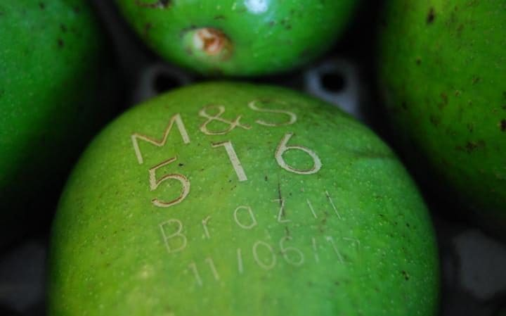 Avocados labelled by laser