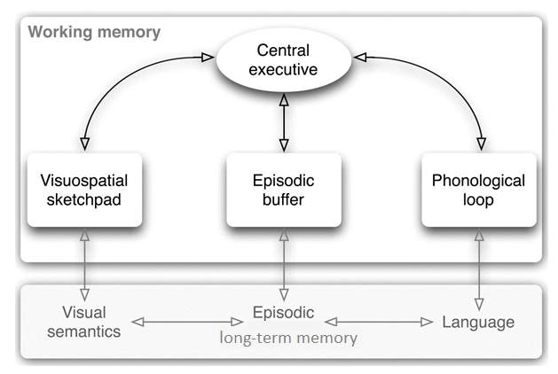 Baddeley's Model of Working Memory 2.png