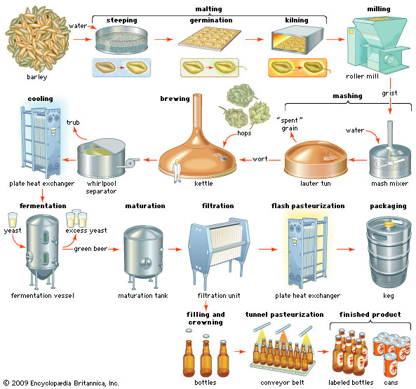 The process of beer production.