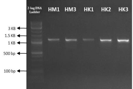 C:UsersmariAppDataLocalMicrosoftWindowsINetCacheContent.WordSR701-PCR.JPG