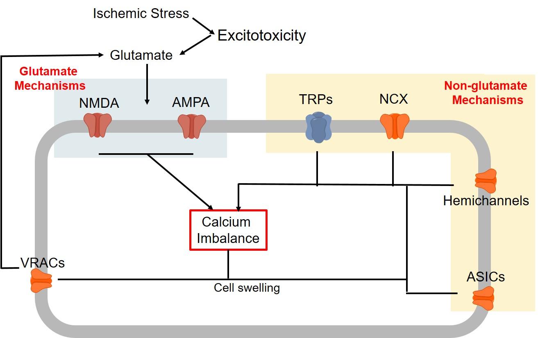 C:UsersAnalysisDesktopFeiya Master ThesisFiguresChemdrawNon-Glutamate mechanismsFigure 2 Non-Glutamate.jpg