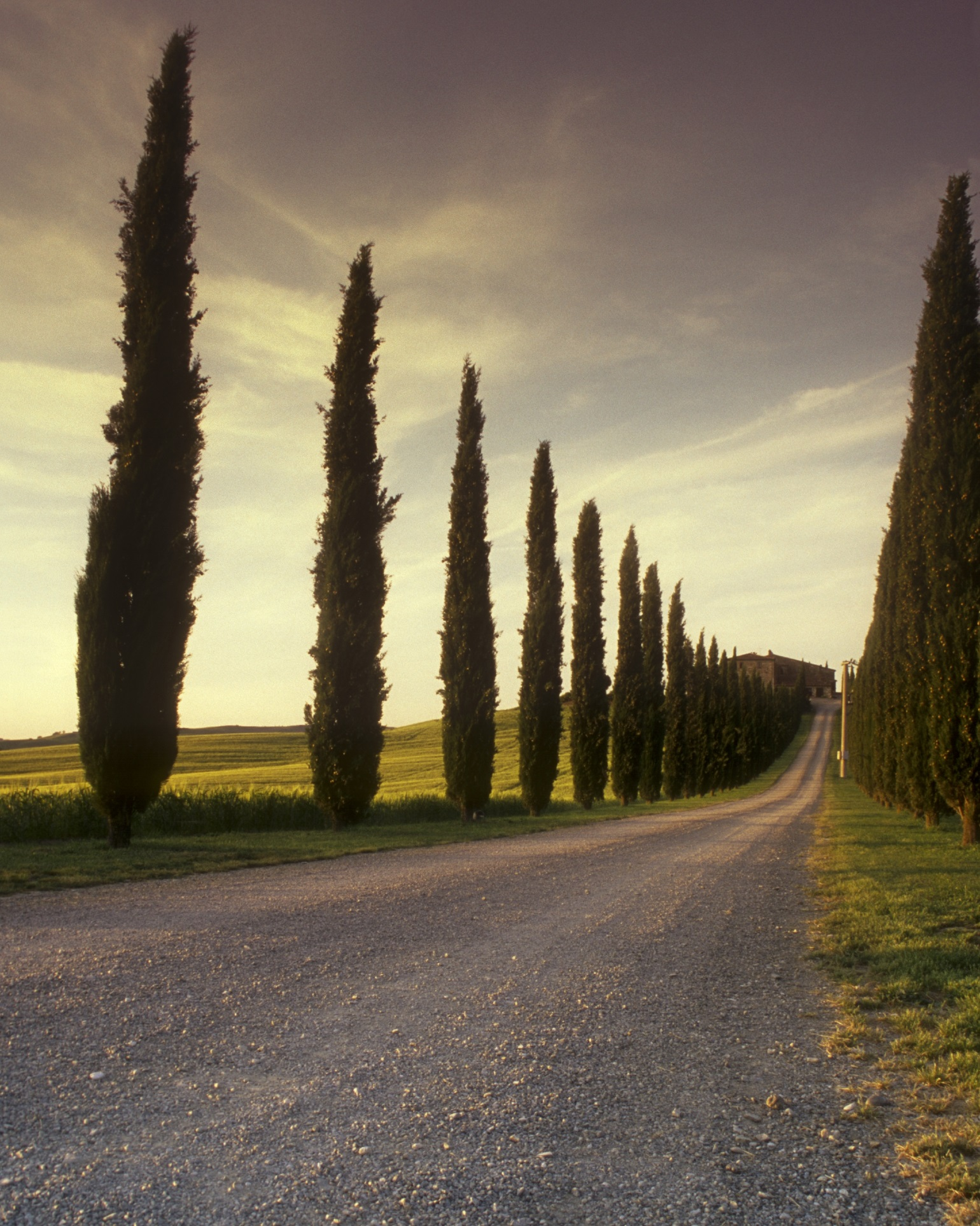 A picture of a winding road and trees