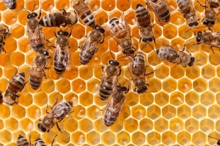 C:UsersDheeraj ManikantaAppDataLocalMicrosoftWindowsINetCacheContent.Wordmonitoring-beehives-bees.jpg