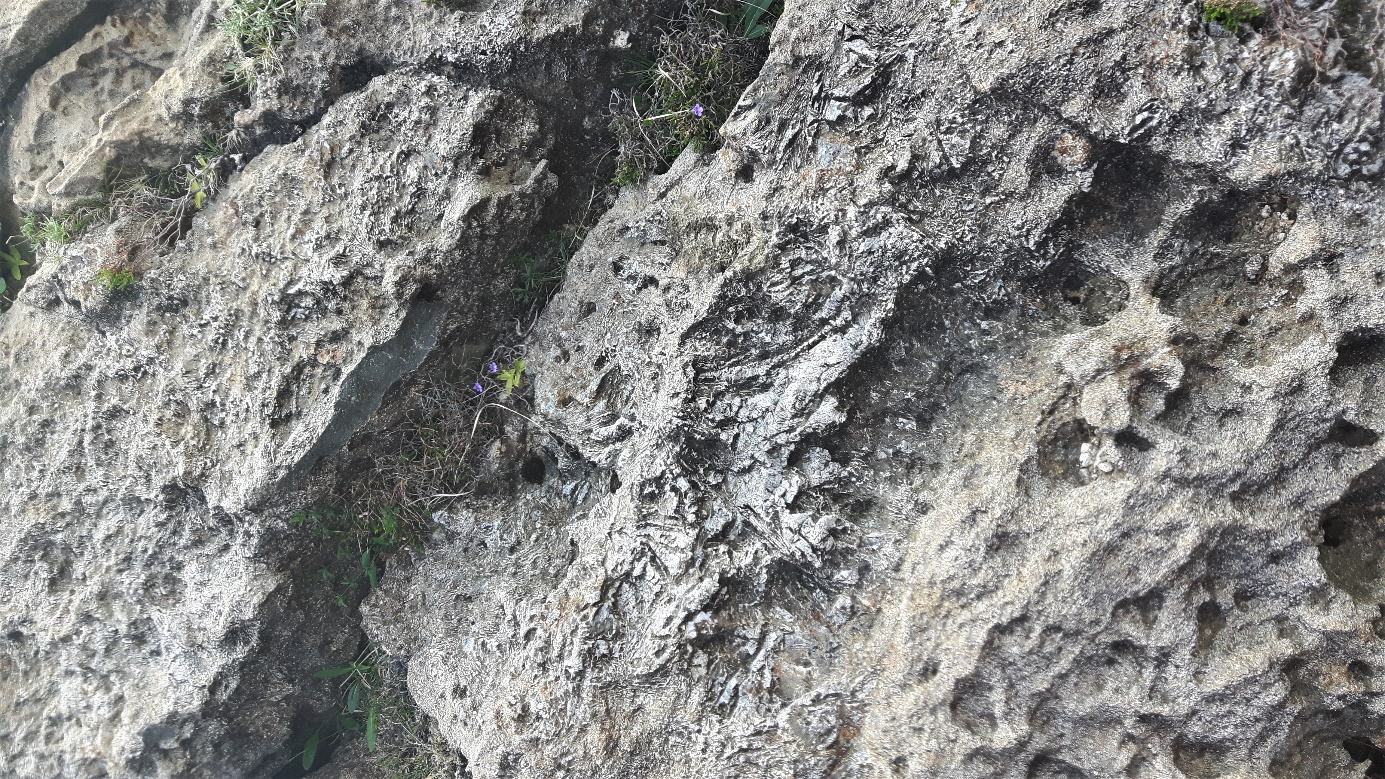 A close up of a rock  Description generated with very high confidence