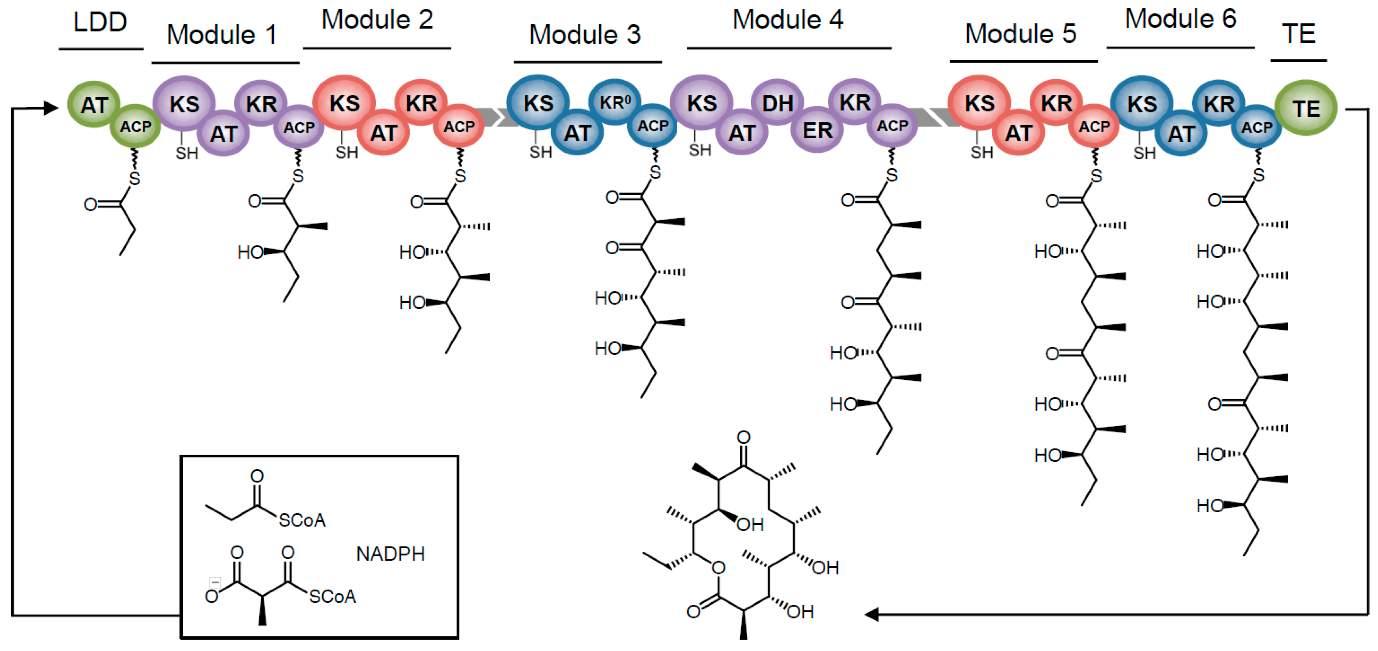 Molecules 22 00235 g002