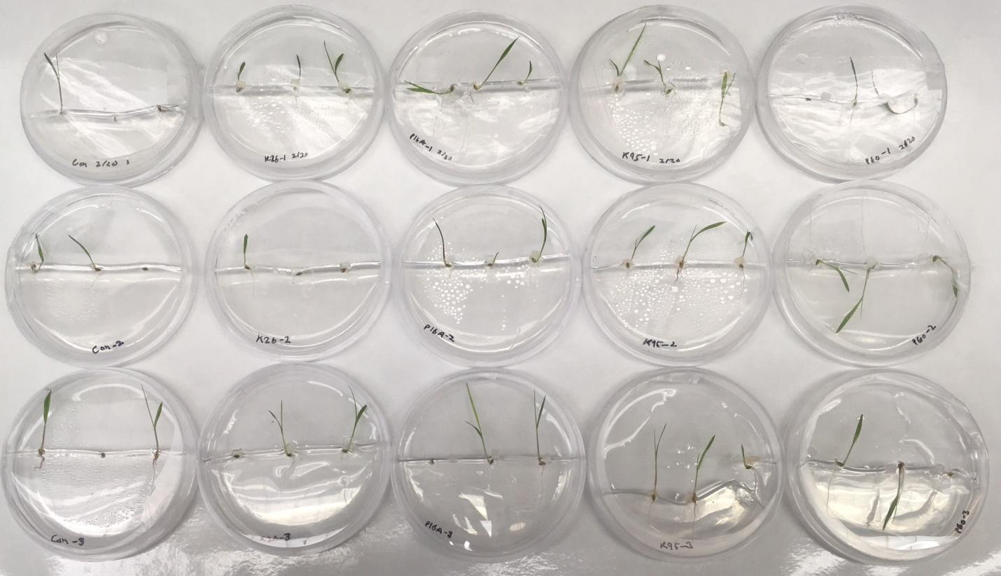 Plant Fungi Test FULL.jpg