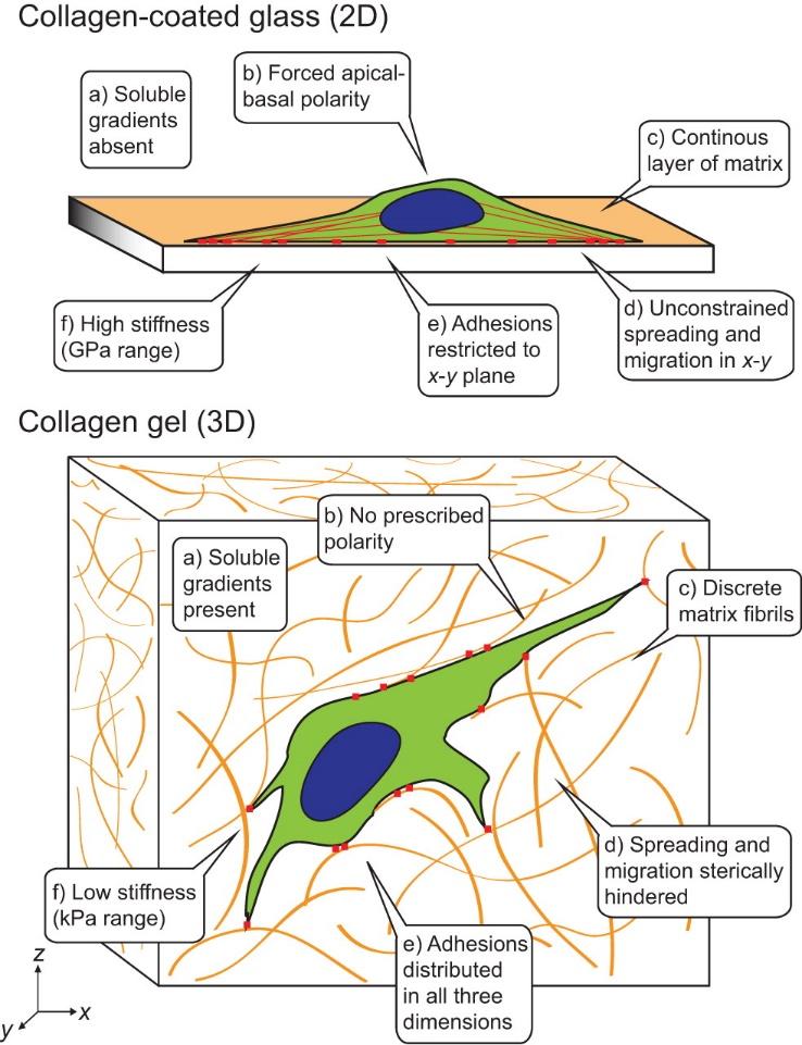 http://jcs.biologists.org/content/joces/125/13/3015/F2.large.jpg?&&carousel=1