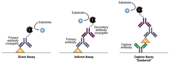 Diagram and comparison of common ELISA formats