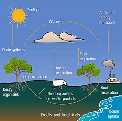 https://www.lenntech.com/images/Carbon/Carbon-cycle.jpg