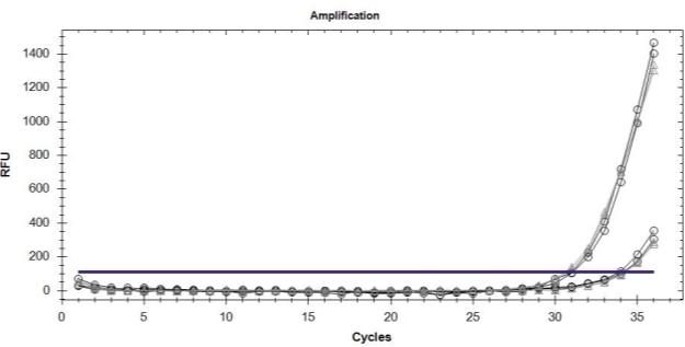 C:ArticleMultiplex detection of the two alleles.jpg